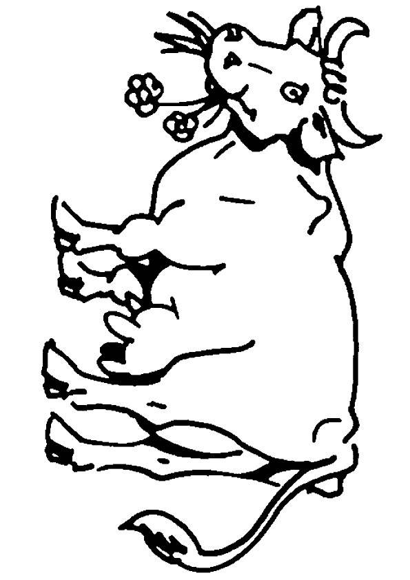 Free coloring and drawings A healthy cow Coloring page