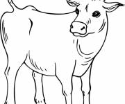 Free coloring and drawings Maternal cow Coloring page