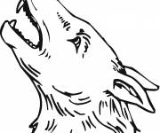 Free coloring and drawings Coyote head Coloring page