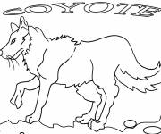Free coloring and drawings Coyote in black and white Coloring page