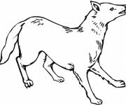 Free coloring and drawings Coyote in color Coloring page