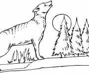 Free coloring and drawings Coyote in the forest Coloring page