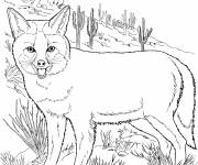 Free coloring and drawings Coyote portrait Coloring page