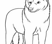 Free coloring and drawings Maternal coyote Coloring page