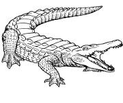 Coloring pages Crocodile 11