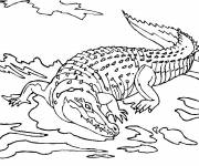 Coloring pages Crocodile in the lake