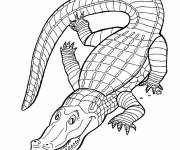 Coloring pages Crocodile online