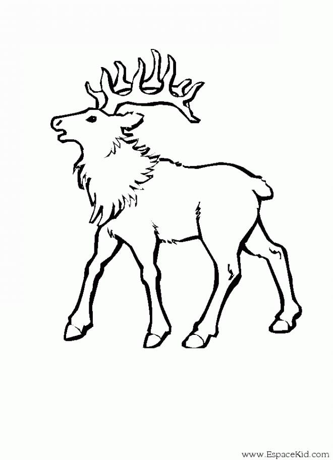 Free coloring and drawings A big deer Coloring page