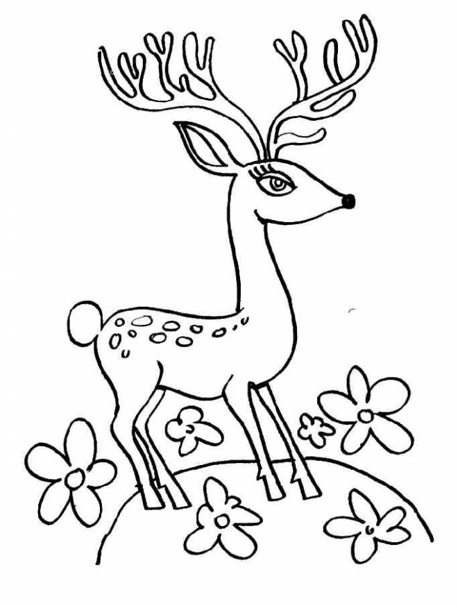 Free coloring and drawings A deer with beautiful eyes Coloring page