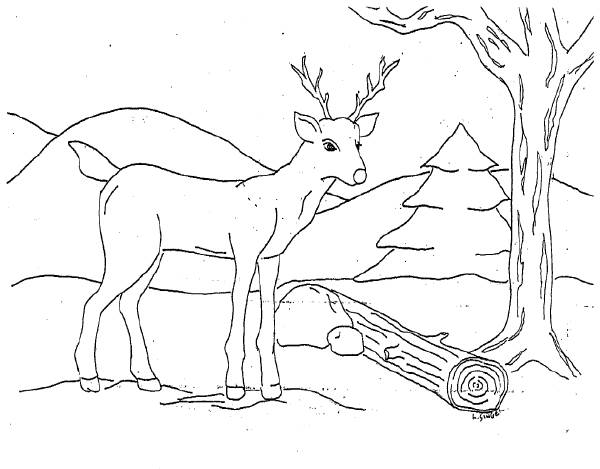 Free coloring and drawings A European male deer Coloring page