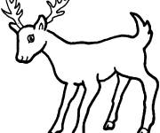 Free coloring and drawings A little deer Coloring page