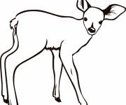 Free coloring and drawings An easy little deer Coloring page