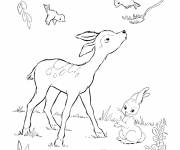 Free coloring and drawings Deer and birds Coloring page