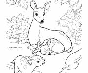 Free coloring and drawings Deer and cubs Coloring page