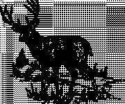 Free coloring and drawings Deer in black Coloring page