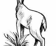 Free coloring and drawings Deer in pencil Coloring page