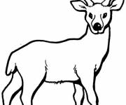 Free coloring and drawings Deer portrait Coloring page