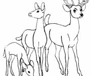 Free coloring and drawings Family deer Coloring page