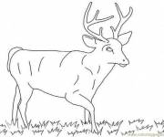 Free coloring and drawings Male deer Coloring page