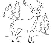 Free coloring and drawings Roe deer in the forest Coloring page