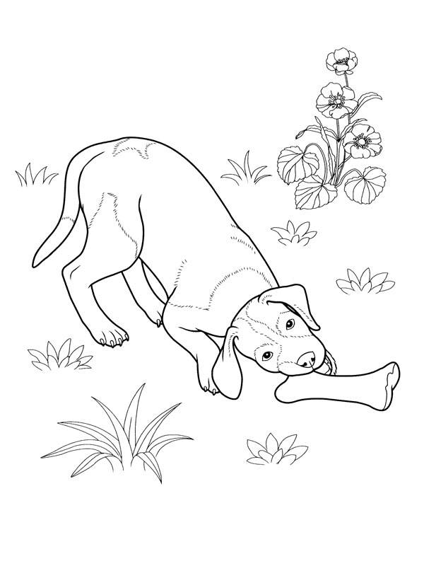 Free coloring and drawings Dog and bone in the garden Coloring page