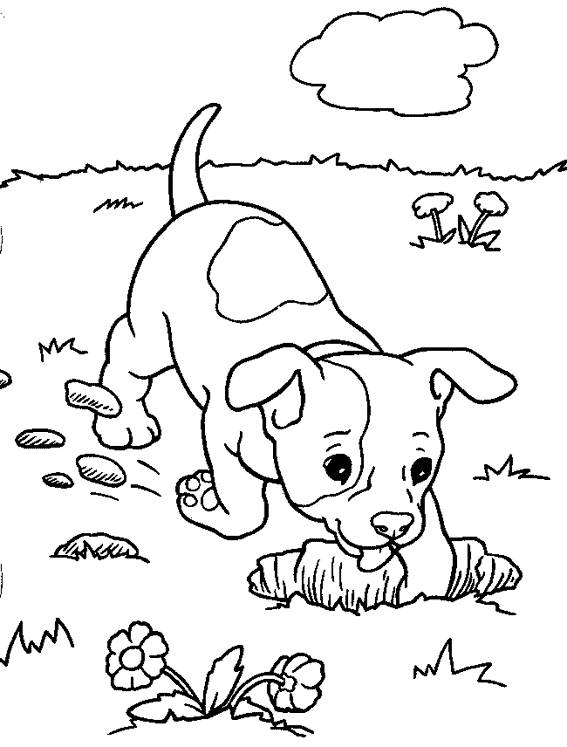 Free coloring and drawings Dog in the garden Coloring page