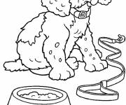 Free coloring and drawings Poodle dog Coloring page