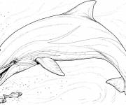 Coloring pages Dolphin and fish