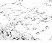 Coloring pages Dolphins as a family