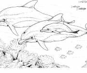 Coloring pages Dolphins in pencil