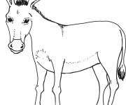 Free coloring and drawings Donkey for children Coloring page