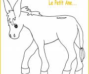 Free coloring and drawings The little donkey Coloring page