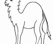 Coloring pages Bizarre camel