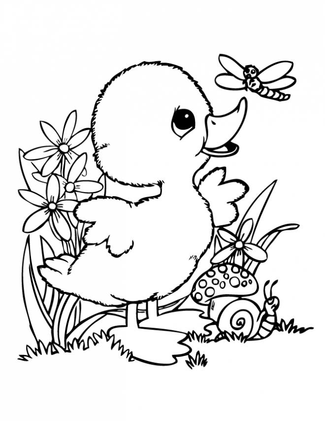 Free coloring and drawings A duckling is playing in nature Coloring page