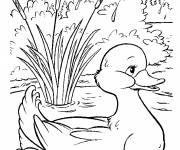 Free coloring and drawings Duckling and river Coloring page
