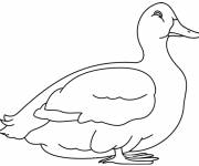 Free coloring and drawings White duck Coloring page