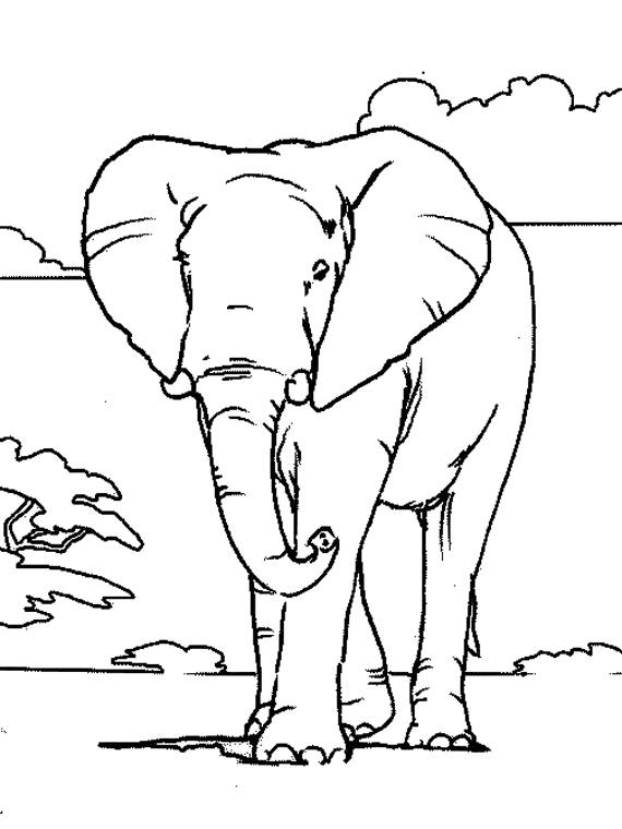 Free coloring and drawings Adult elephant Coloring page