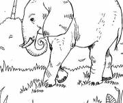 Coloring pages Elephant in the wild