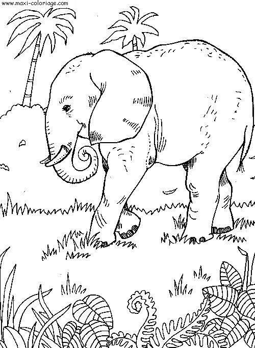 Free coloring and drawings Elephant in the wild Coloring page