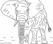 Free coloring and drawings Realistic elephant Coloring page