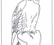 Coloring pages Black and white hawk