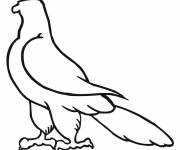Coloring pages Easy hawk