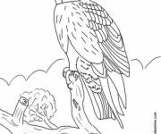 Coloring pages Falcon on the tree