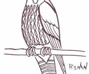Coloring pages Hawk to download