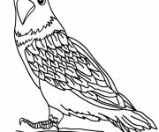 Coloring pages Little falcon