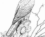 Coloring pages Maternal falcon