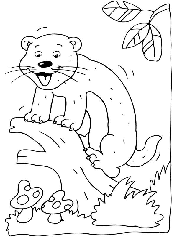 Free coloring and drawings Ferret on the tree Coloring page