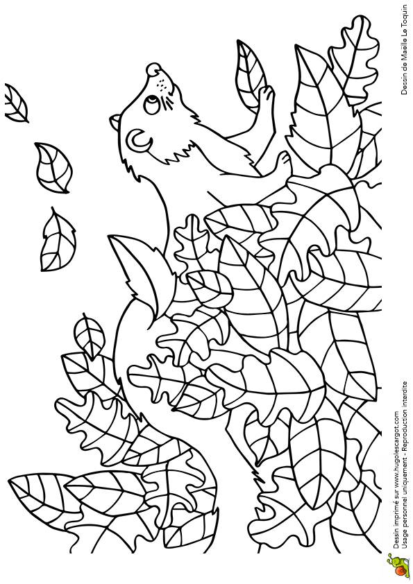 Free coloring and drawings Ferret playing Coloring page