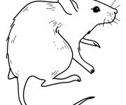 Coloring pages Easy field mouse