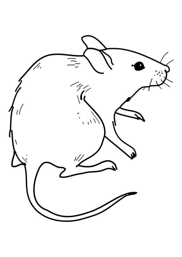 Free coloring and drawings Easy field mouse Coloring page